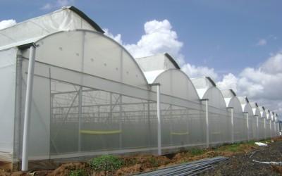 Reunion Informativa sobre cultivos bajo techo